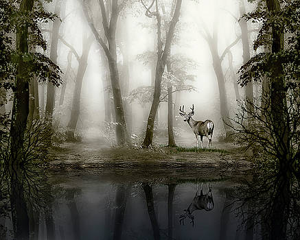 Misty Morning Reflections by Diane Schuster