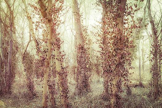 Misty Morning Winter Forest  by Robert FERD Frank
