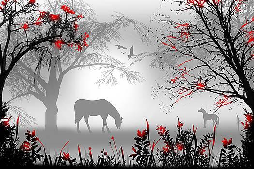 Misty Mornings by Peter Stevenson