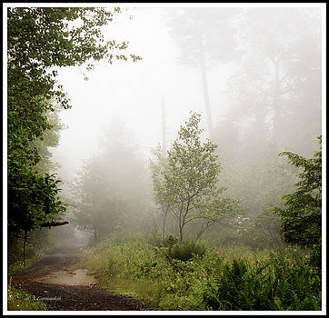 Misty Road at Forest Edge, Pocono Mountains, Pennsylvania by A Gurmankin