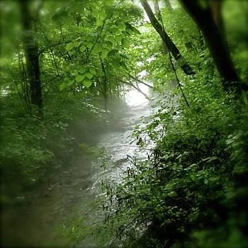 Misty Stream by Tina Valvano