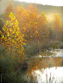 Misty Sunrise at Lost Maples State Park by Debbie Karnes