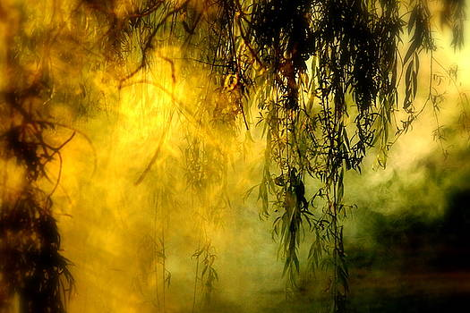 Misty Willow by Annie Lemay
