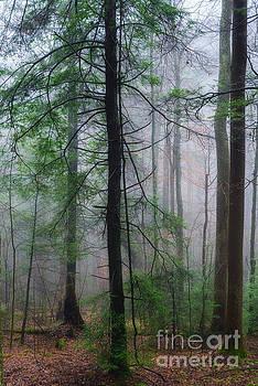 Misty Winter Forest by Thomas R Fletcher