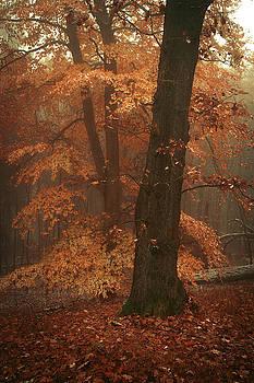 Jenny Rainbow - Misty Woods