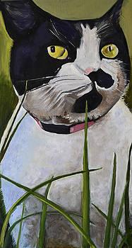 Mitza The Cat by Shira Chai