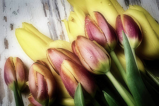 Mixed Tulips by Garry Gay
