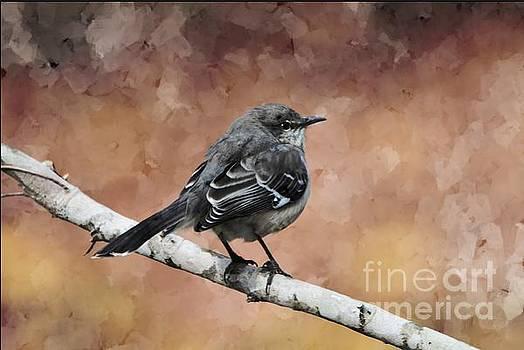 Mockingbird by Debbie Green