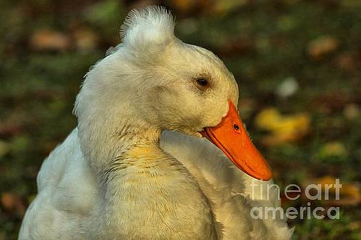 Adam Jewell - Mohawk Duck