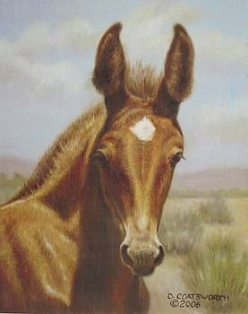 Molly Mule Foal by Dorothy Coatsworth