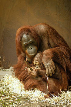Mom and baby Orang Utan by Steppeland -