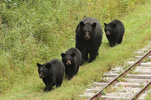 Momma Blaze and The Three Little Bears by Teresa McGill