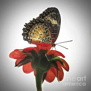 Monarch 2 the photo by Rrrose Pix