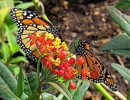 Monarch Handshake by Suzy Piatt
