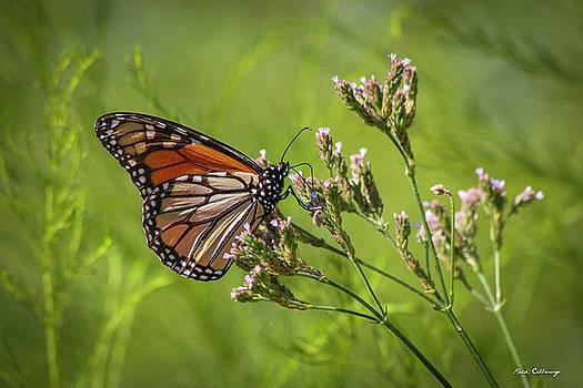 Monarch Headed South  by Reid Callaway