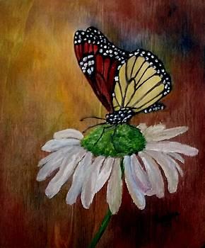 Monarch on Daisy by Sandra Maddox