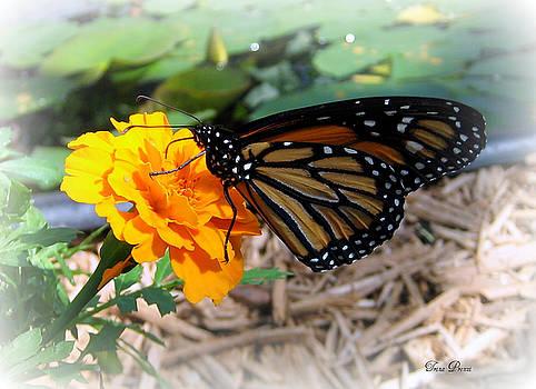 Monarch by Trina Prenzi