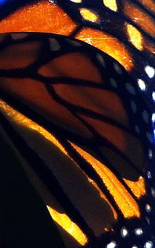Monarch Wings by Laurie Pike