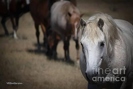 Monero Mustangs Wild Horses by Veronica Batterson