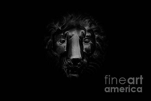 Monochrome Lion by Floyd Menezes