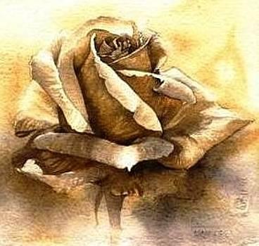 Monocromatic Rose by Sandra Phryce-Jones