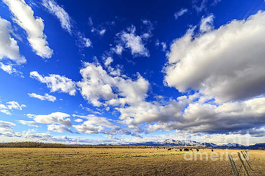Montana Cattle Ranch by John Lee