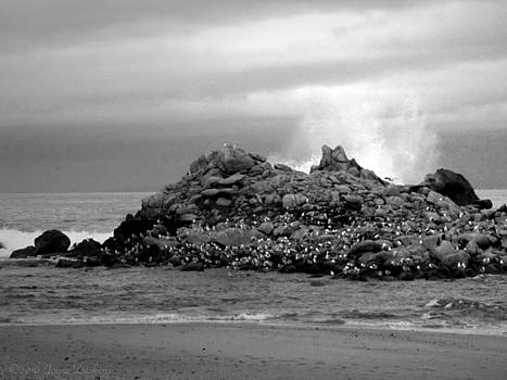 Joyce Dickens - Monterey Bay Birds Take Shelter In B And W