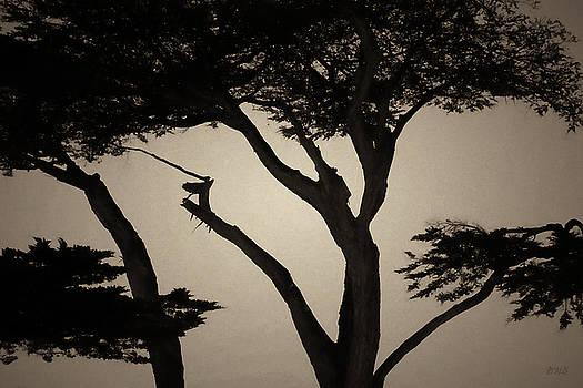 David Gordon - Monterey Cypress I Toned