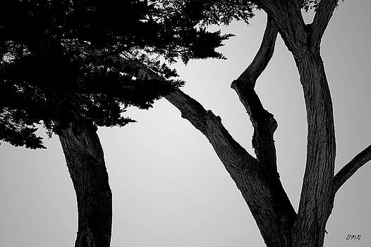 David Gordon - Monterey Cypress II BW