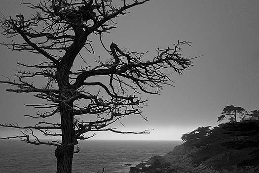 Monterey Penninsula I BW by David Gordon