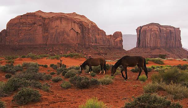 Monument Valley Wild Horses by Brad Scott