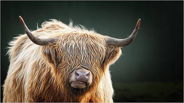 Moo Lookin At Me by John Fotheringham