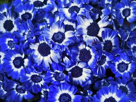 Mood blues by Maneesh Kumar