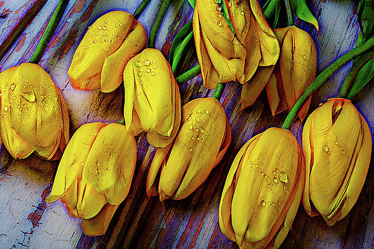 Moody Graphic Tulips by Garry Gay