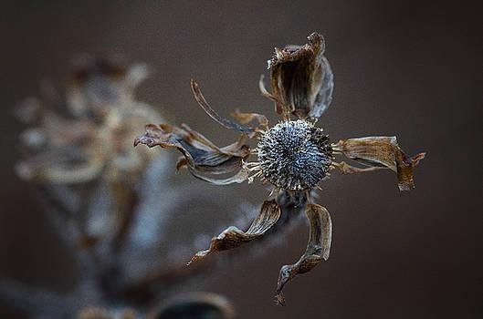 Moody Winter Flowers by Nikki McInnes