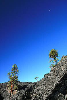 Moon Cedars and Moon by Larry Darnell