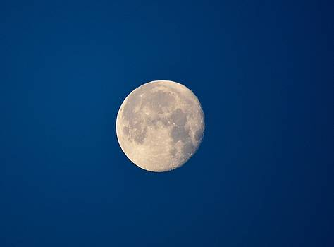 Moon in the Morning by Dacia Doroff