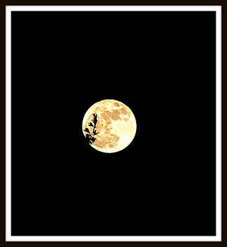 Moon Leaves by Sarah Hamlin