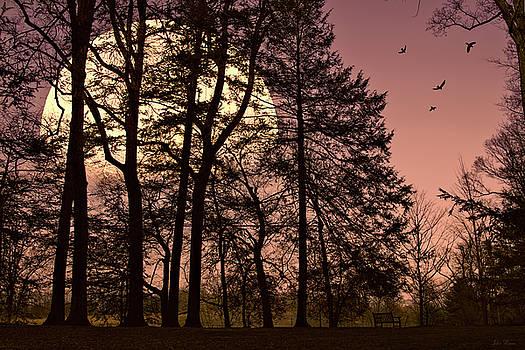 Moon Lit Silhouette by John Rivera
