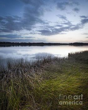 Lisa McStamp - Moon over the Marsh
