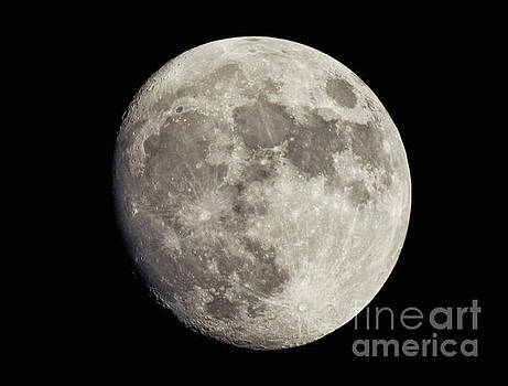 Moonlight Sonata by Mariola Bitner