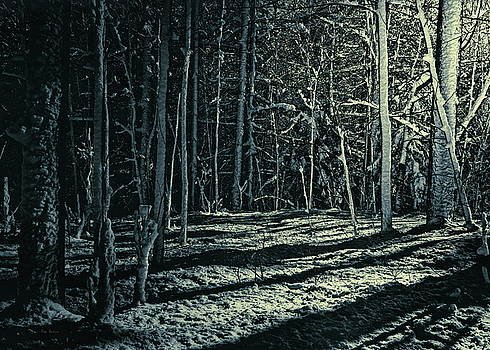 Moonlight Through The Trees by Bob Orsillo