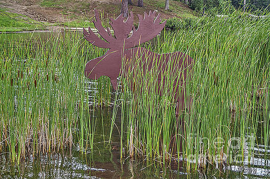 Moose in Bulrushes by Sue Smith