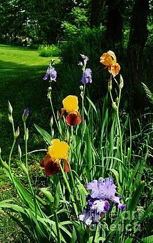 More Backyard Flowers by Marsha Heiken