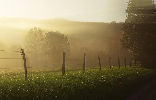 Morning Dew by Jonas Wingfield