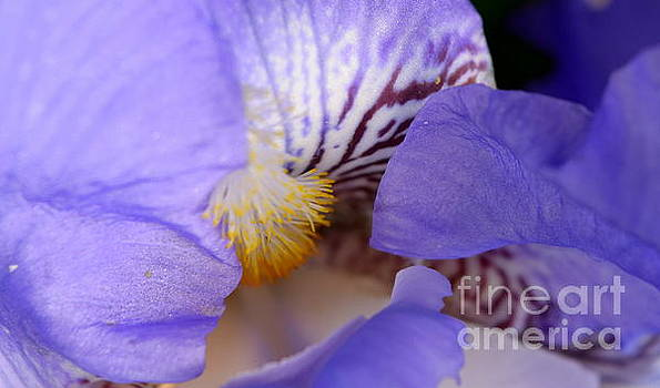 Morning Flower 2 by Justin Moore