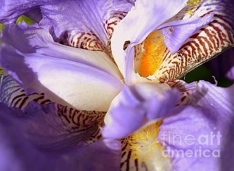 Morning Flower Stripes by Justin Moore