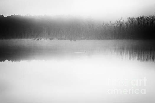Lisa McStamp - Morning Fog
