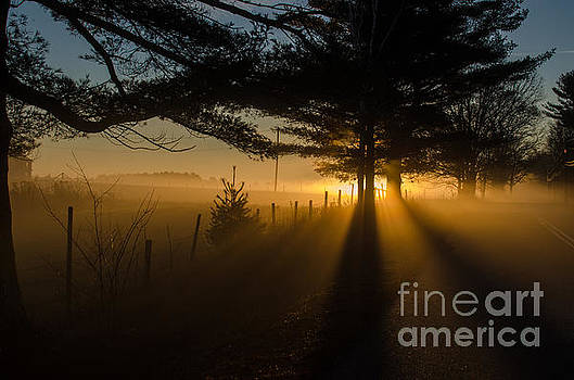 Morning Fog by Paul Noble