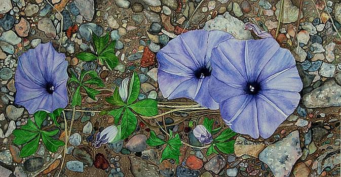 Morning Glory Painting by Janet Pancho Gupta